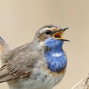 Vogelaars vinden eindelijk een plek in Rusland